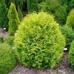 Мульча из коры лиственницы (1)